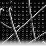 wl - hide or show widgets in wordpess